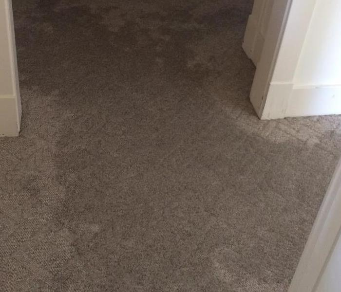 Wet Carpets in Pawling NY