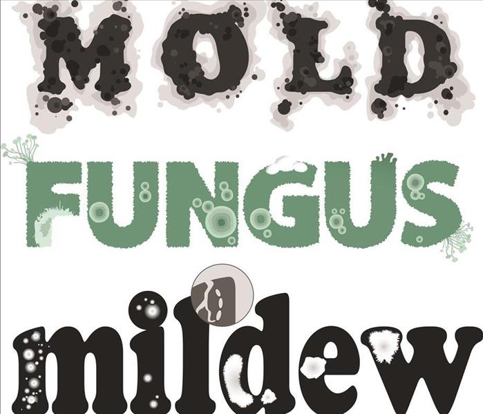 Graphic Lettering of Mold Fungus Mildew