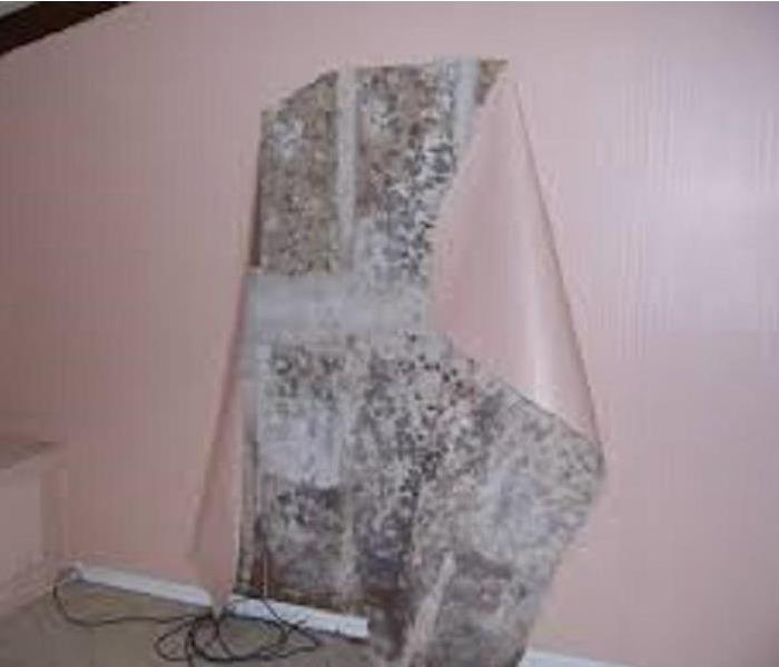 Mold Remediation Mold Removal or Remediation?
