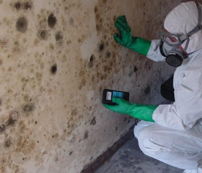 Mold Remediation Understanding Mold In Your Dutchess County Home